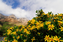 CTscenic-cape-town-flowers-spring-landscape-clouds 800 533 80